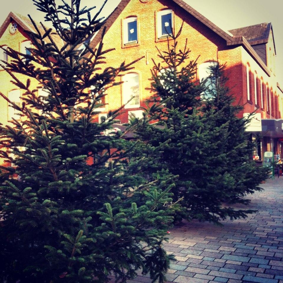 Weihnachtsbäume Sylt