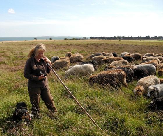 Schäferin Uta Wree und Herde in der Braderuper Heide