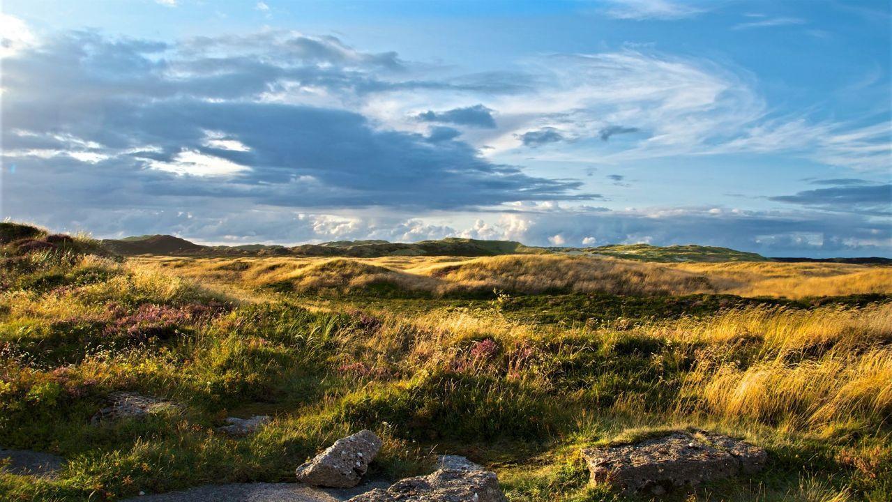 Die Heidelandschaft auf Sylt zeigt deutlich, dass die Insel mehr als Strand und Nordsee zu bieten hat