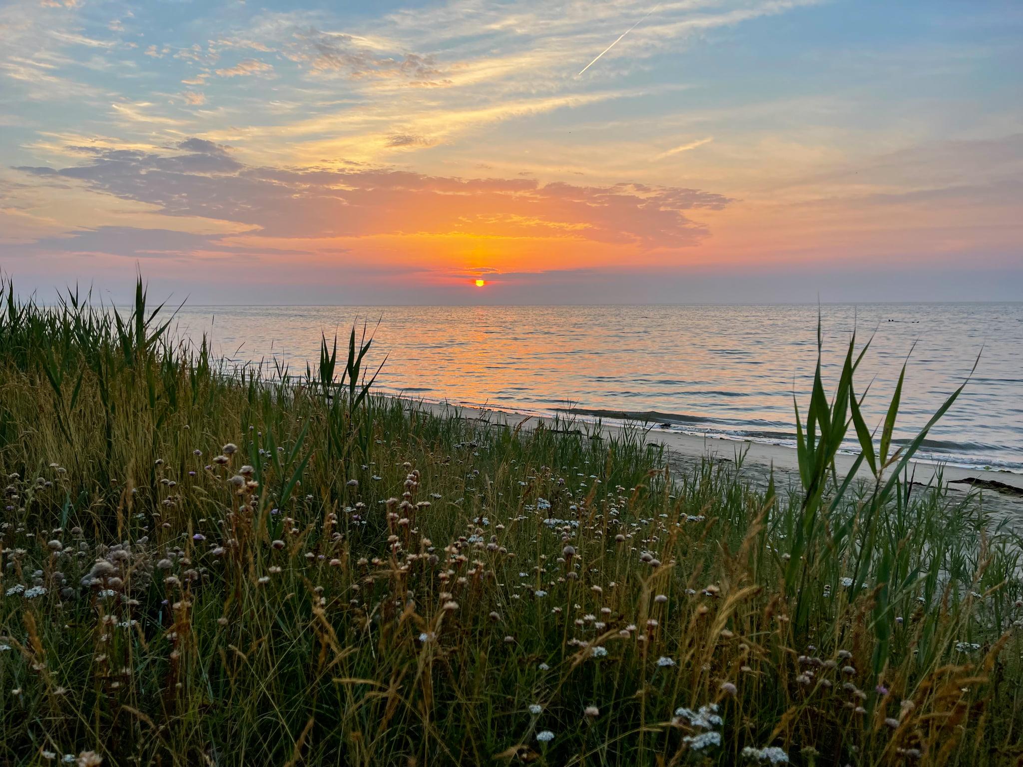Die Braderuper Heide finden Sie zwischen Kampen und Wenningstedt, wenn sie am Wattenmeer entlang fahren