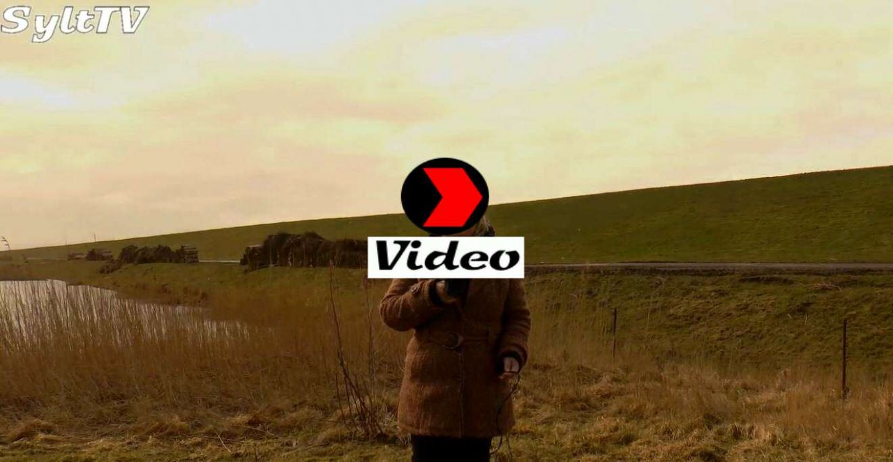 Sylt TV Video 02.03.2015
