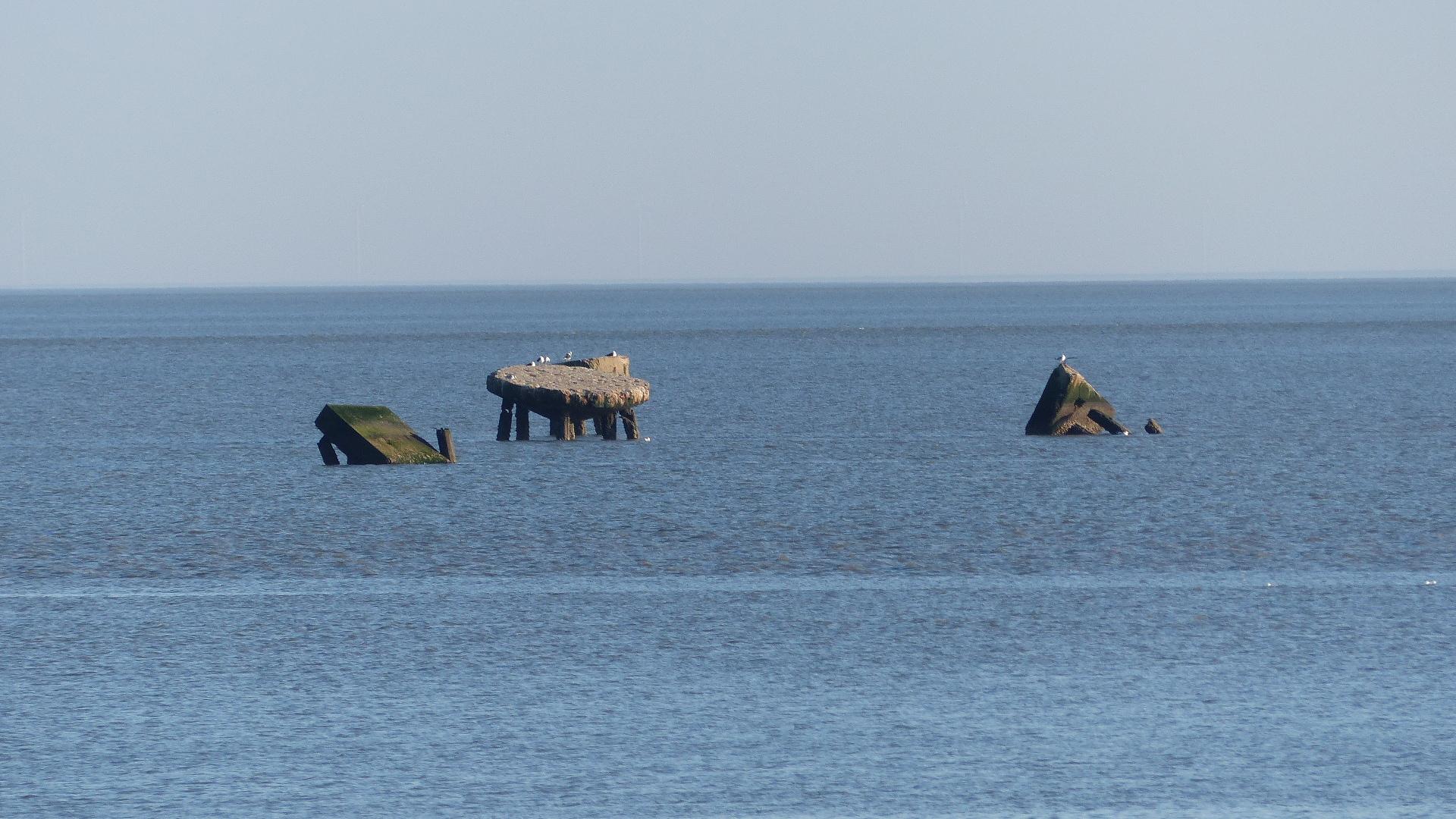 Die Seekühe im Sylter Norden